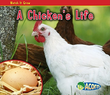 A Chicken's Life By Dickmann, Nancy